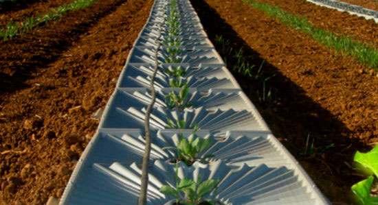 công nghệ tưới cây nhỏ giọt từ không khí